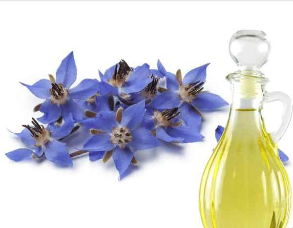 Propiedades y beneficios del aceite de borraja