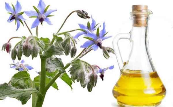 uso del aceite de borraja