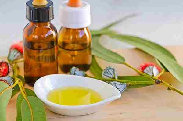 beneficios aceite de eucalipto