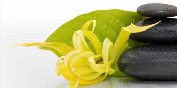beneficios del aceite de ylang